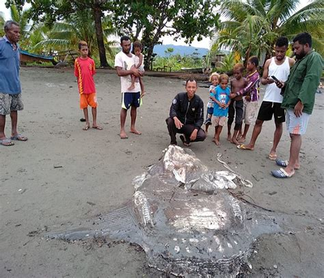 wow  ikan mola mola  nabire papua