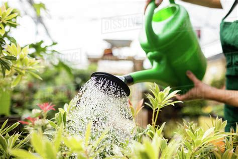 Female Florist Watering Plants With Watering Can In Garden
