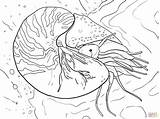 Nautilus Coloring Chambered Cuttlefish Pompilius Printable Supercoloring Template Fish Designlooter Colouring 1536px 86kb 2048 sketch template