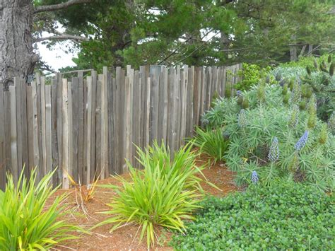 climbing vines for fences backyard fencing ideas landscaping