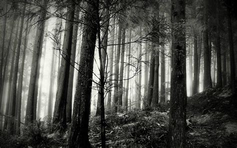 black forest wallpapers