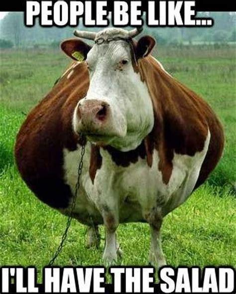 Calves Meme - herd humor page 5 backyardherds com