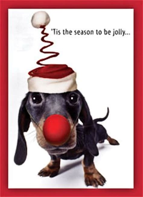 shedaisy deck the halls karaoke dachshund to be cards