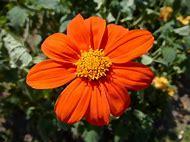 Orange Color Plants Flowers