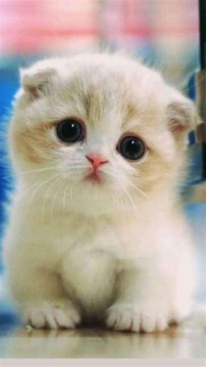 Kittens Cutest Adorable Cats Animals Cat Kitten