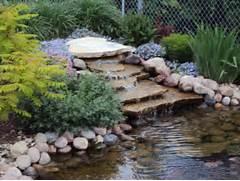 Water Garden Water Gardens A Wonderful Way To Unwind Glenns Garden Gardening Blog
