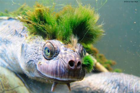 Top 10 Most Amazing EDGE Reptiles EDGE of Existence