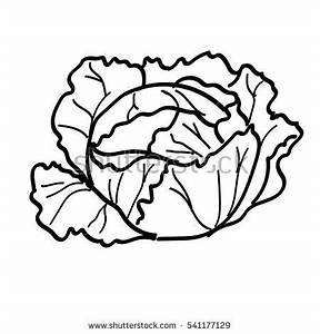 Black And White Cabbage Pictures to Pin on Pinterest ...