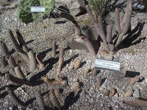 3 desert plants desert plants