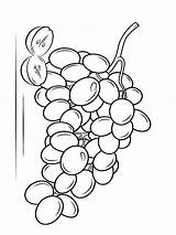 Coloring Grapes Pages Grape Fruits Fruit Template Printable Recommended Favorite sketch template
