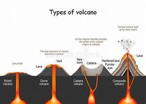 Volcano Type Infographic   Vector   Volcanic Eruption