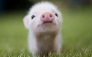 pigs veterans today news military foreign affairs