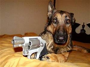 Dogs with Cameras - What next, dogs with guns? - Pelican ...