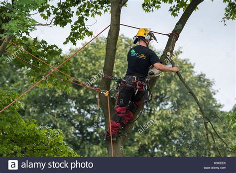 Tree Surgeon Working High In Stock Photos & Tree Surgeon