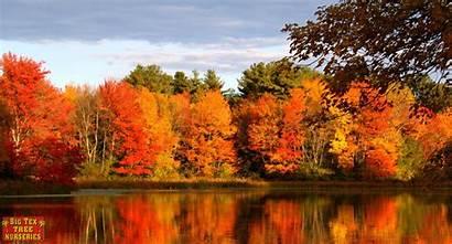 Fall Trees Texas Drop