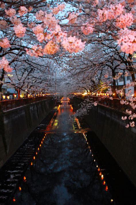 photography japan landscape flowers travel sakura asia