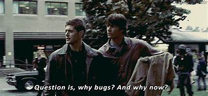 Supernatural Bugs