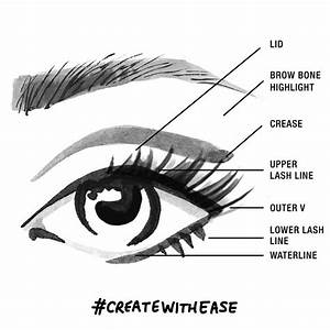 Parts Of The Eyelid For Makeup