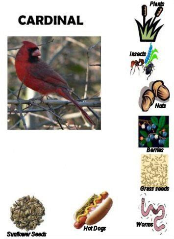 cardinal favorite foods for the kids crafts activities