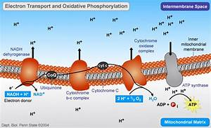 Protein synthesis simplified