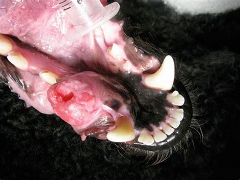 oral cancer patient  atlanta veterinary dentistry