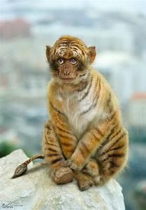 Tiger Dog Hybrid