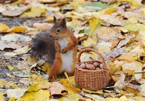 Fall Wallpaper With Animals - fall animal wallpaper 65 images