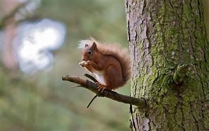 Backgrounds Animal Squirrel Screensaver Desktop Wallpapers Animals