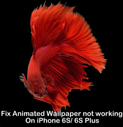 Iphone 6s Animated Wallpaper - fix animated wallpaper not working on iphone x 8 8 plus 7