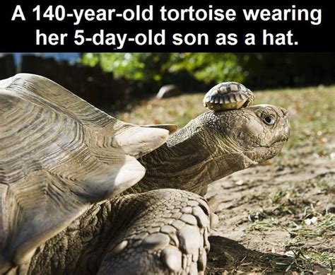 year  tortoise   baby pictures