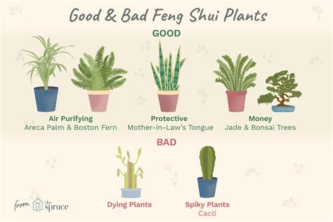 good  bad feng shui plants