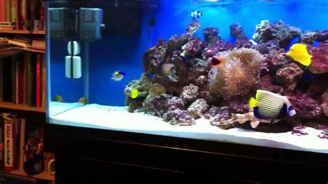 salt water fish tank saltwater aquarium fish tanks www imgkid com the image kid has it