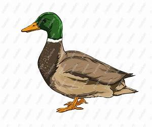 Mallard Duck Cartoon Clipart - Clipart Suggest