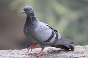 Faire Fuir Les Pigeons : 5 astuces pour repousser les pigeons sans les blesser ~ Melissatoandfro.com Idées de Décoration
