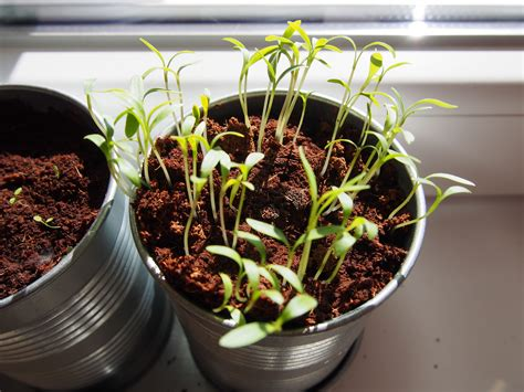 starting seedlings tips on successfully starting seeds