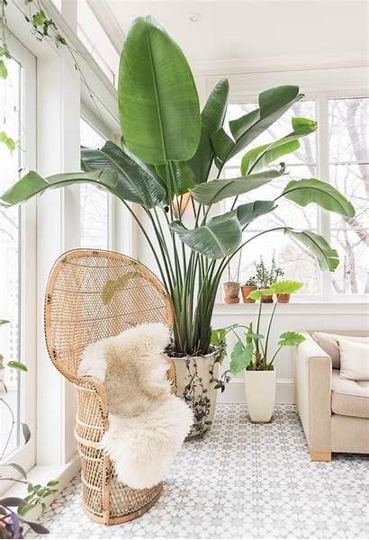 Woonkamer Grote Kamerplant Plant Hoek Een Roomed