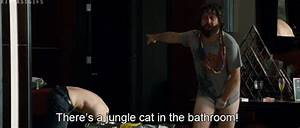 Bradley cooper tiger gif find share on giphy for The hangover tiger in the bathroom