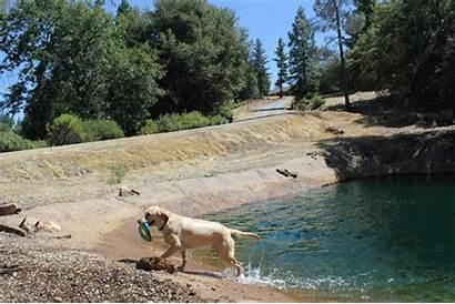 Country California Ranch Dog Gold Vacation Northern