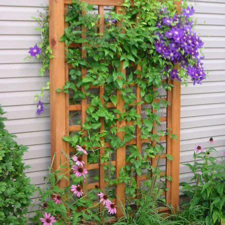 Home  Sat Nov 18  Wood Trellis, Clematis And Plants