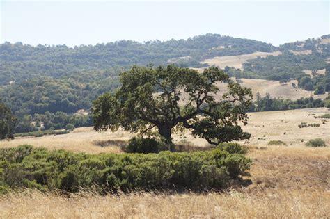 Mamma Quail Hiking California The Dry Foothills