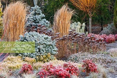 Border At The Winter Garden, Bressingham Gardens, Norfolk