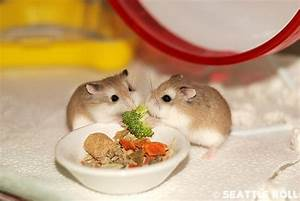 cutest hamster in the world - Google Images on We Heart It