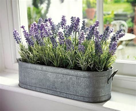 scented indoor plants  give  home  great