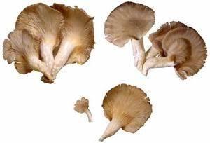 Comment Cultiver Des Champignons : cultiver des pleurotes sur paille ~ Melissatoandfro.com Idées de Décoration