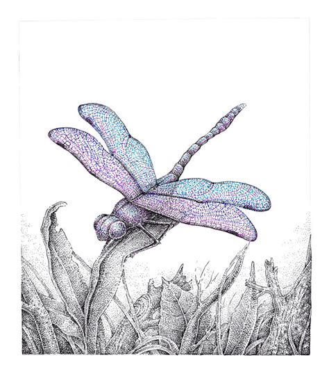 drawing  dragonfly stippling    ink
