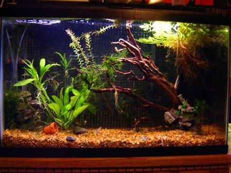 29 gallon aquarium tetra fish tanks 29 gallon gt shop aquariums stands gt tetra gt tetra deluxe led aquarium