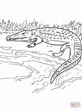 River Crocodile Coloring Nile Pages Bank Drawing Simple Printable Alligator Caiman Getdrawings Getcolorings Clipart Supercoloring Cute Cartoons Baby Categories sketch template