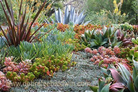 succulent landscapes succulent gardens eclectic landscape san diego by debra lee baldwin