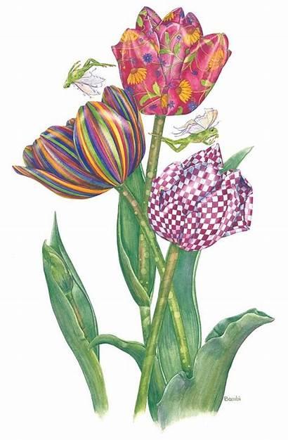 Bambi Tulip Clip Clipart April Papais Flower