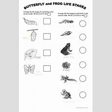 Animal Life Stages Worksheet  Free Esl Printable Worksheets Made By Teachers
